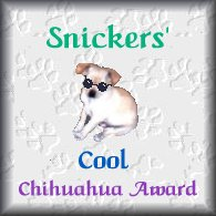 Snickers' Cool Chihuahua Awards.